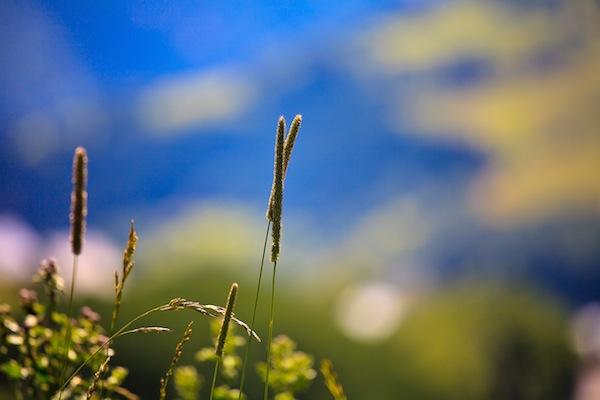 Au ras du sol sylvain landry for Canape bas ras du sol